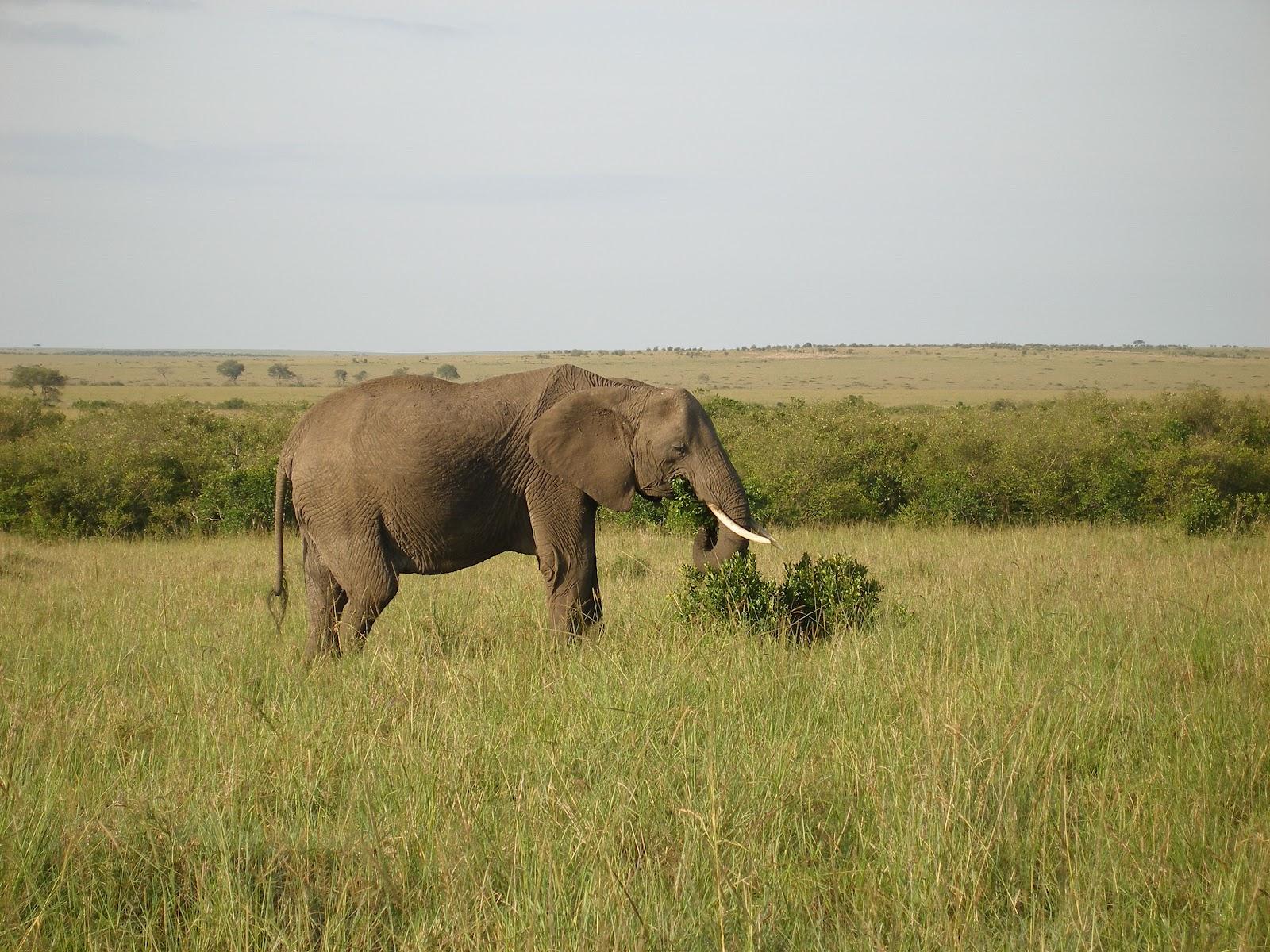african elephants habitat - DriverLayer Search Engine