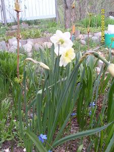 Kevään tullen rohkene kysyä apua puutarhapalvelustamme