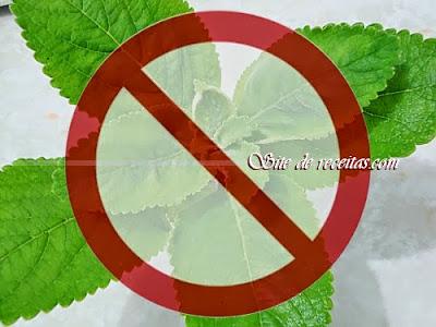 Plantas Medicinais: Contraindicações