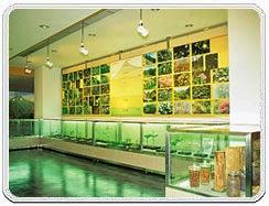 Mizoram State Museum Aizawl India