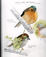 Dibuixant la natura