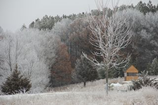 photo of hoar frost covered landscape