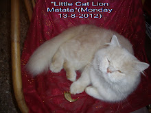 "tomcat matata at 3 years of age with the ""LION CLAW"" of an African lion."