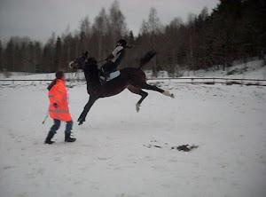 Vi tar emot hästar för inridning!