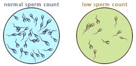 fix low sperm count