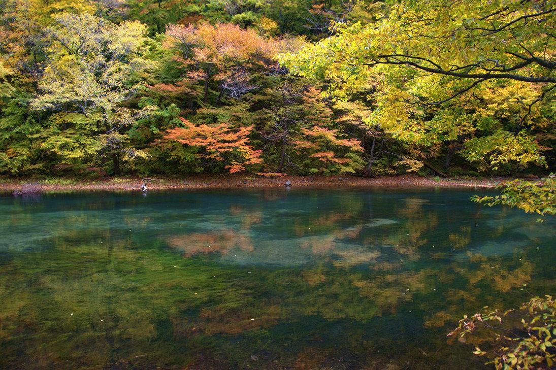 jardines japoneses fotos