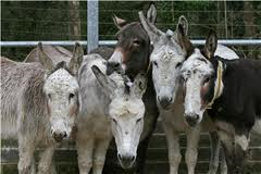 How many donkeys does it take.....