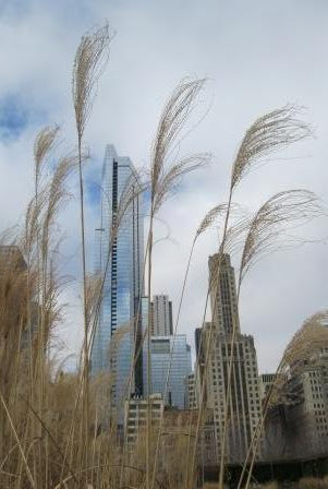Chicago skyline Lurie Garden winter