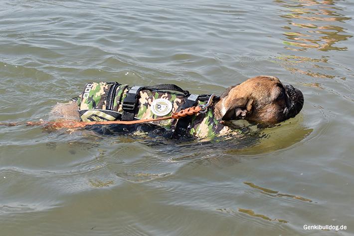 Schwimmweste für Hunde