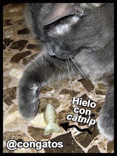 Gato Hielo Juego DIY
