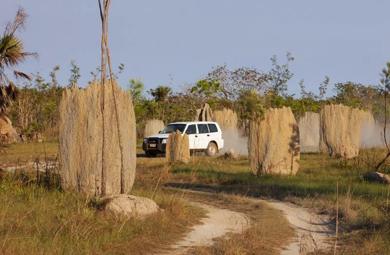 Magnetic termite mounds in Australia