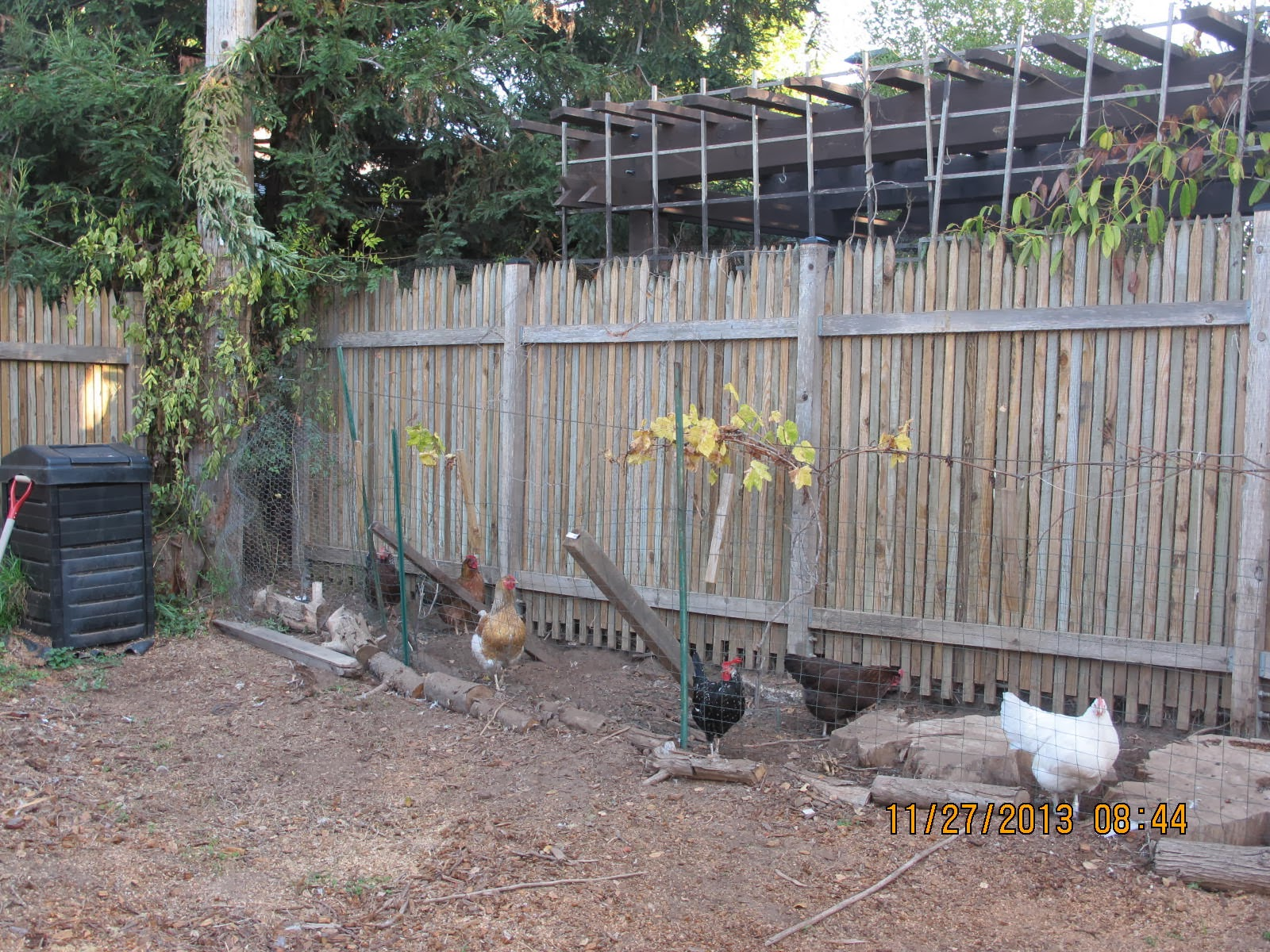 the official poultrybookstore com blog chicken escape