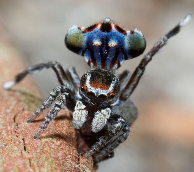 spiders and arachnids similar yet different essay Part spider, part scorpion creature found trove for understanding the evolution of spiders and their other arachnid yet they also have a.