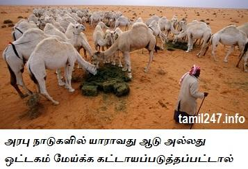 india govt help for farm care workers in abroad, arabu naattil aadu ottagam meikkum thozhil