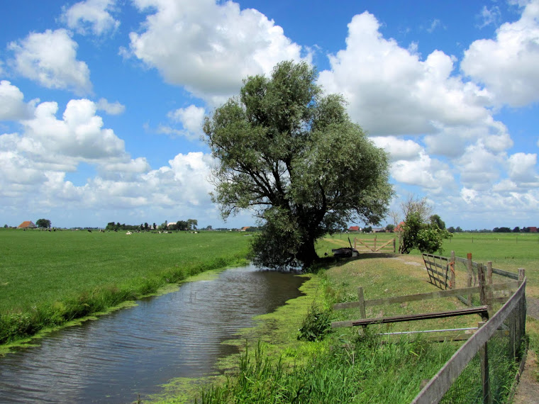 het Friese land