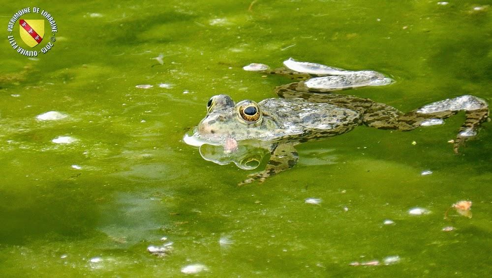VILLERS-LES-NANCY (54) : Le jardin botanique du Montet-Grenouilles et crapauds