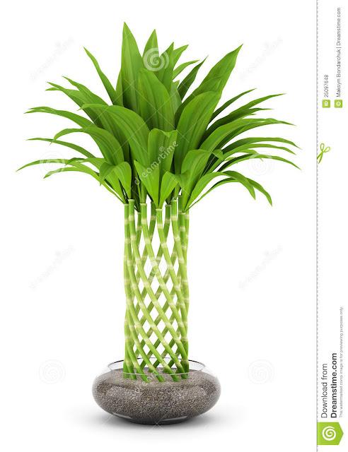 tarım siteniz bitki yetiştirme tasarımları plant growing designs