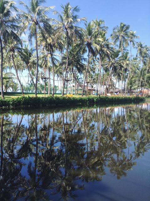 Relexo de palmeiras na água