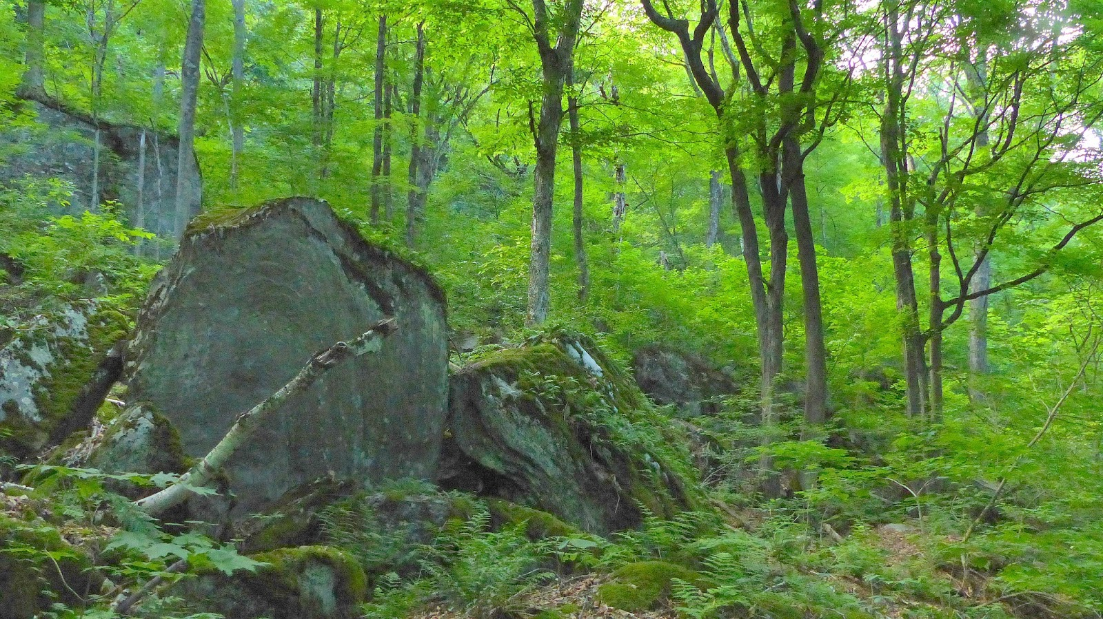 New England Forests Massachusetts Old Growth Forest