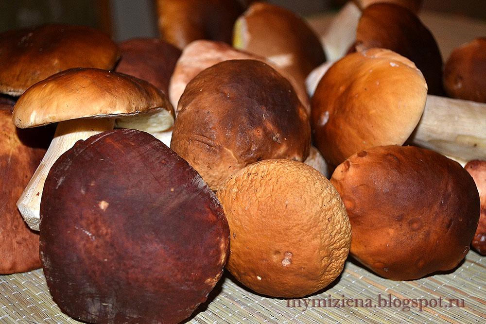 время белых грибов