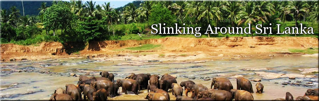 Slinking around Sri Lanka