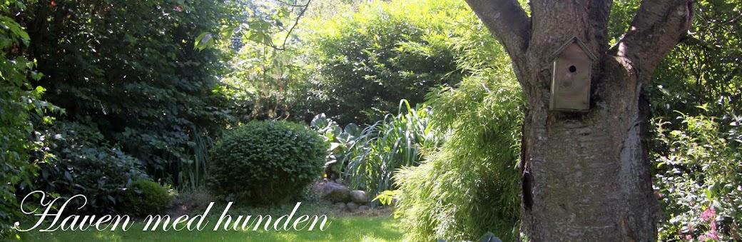 Haven med hunden