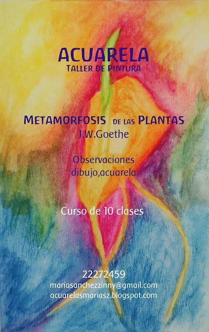 """""""La metamorfosis de las Plantas """""""