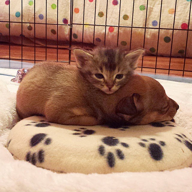 stray kitten abandoned puppy adele and chip-12