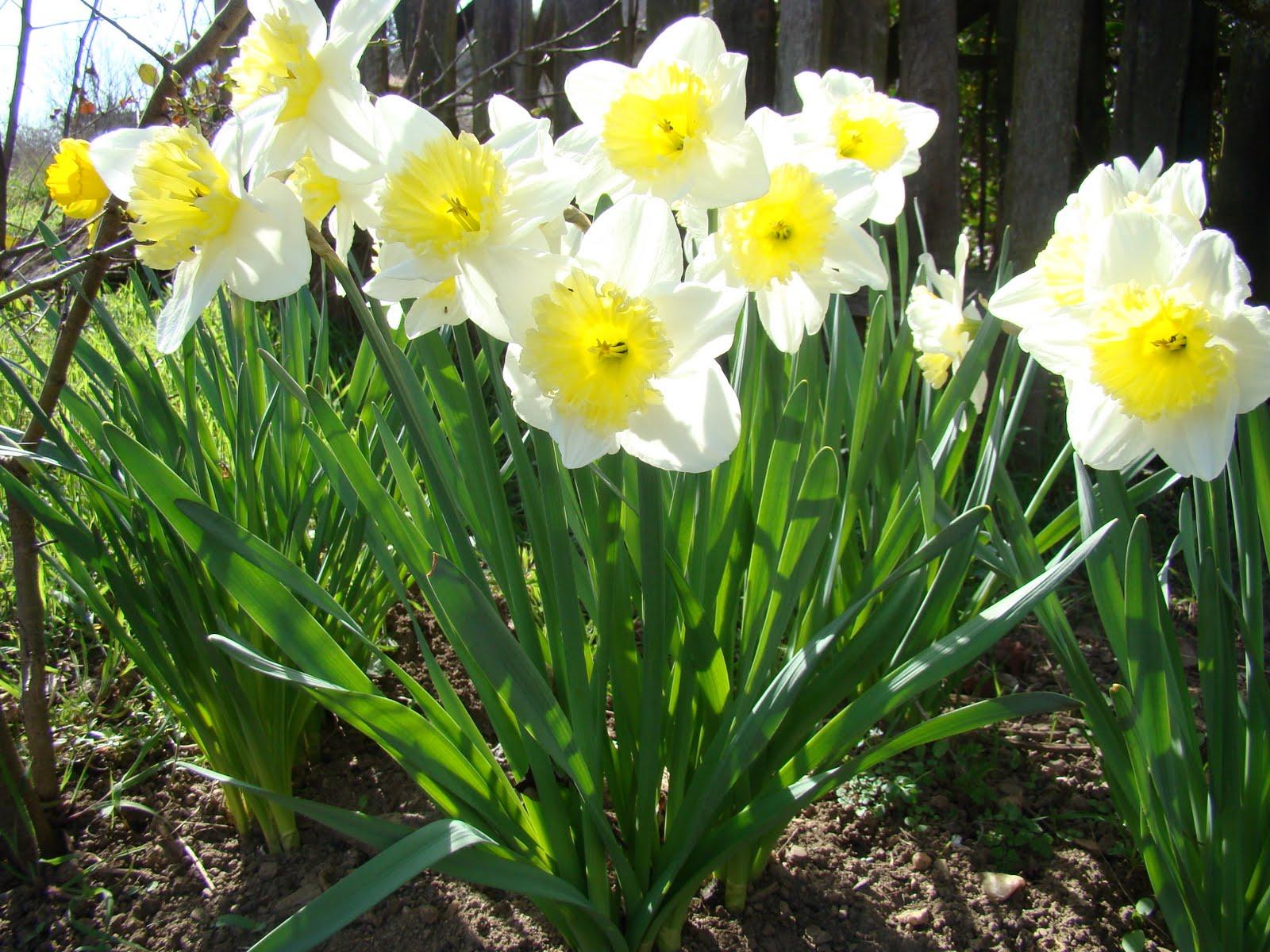 Le jardin de catherine enfin le printemps for Jardin de catherine