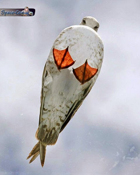 funny seagull bird picture