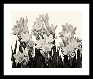 Black and white photograph of wild flowers shot in macro