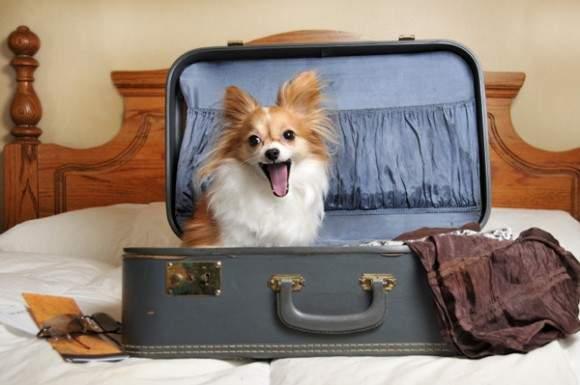 bepergian bersama hewan peliharaan