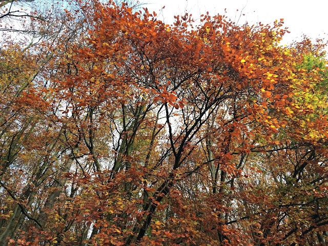 autumn pictures autumn foliage