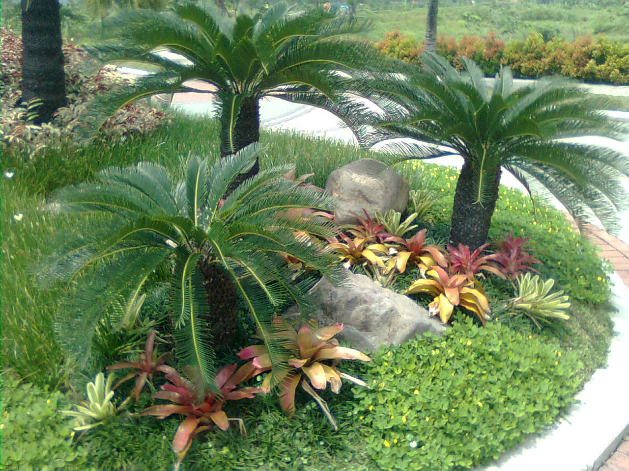 Palms landscape ideas for Idea untuk garden