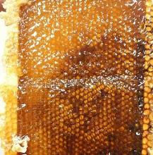 Tid för honung
