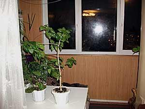 продажа квартир и жиья в Тольятти Автозаводский район.фото