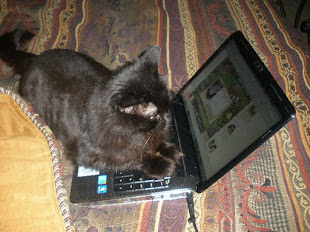 Niblet our cat who was rescued 14 years ago and now spends his days playing computer games.