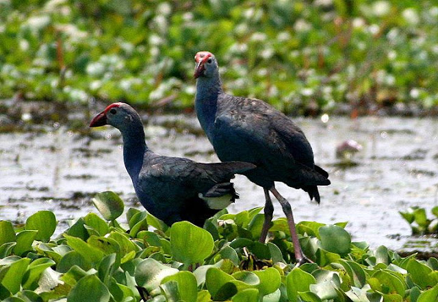 Kumarakom Bird Sanctuary,Kerala