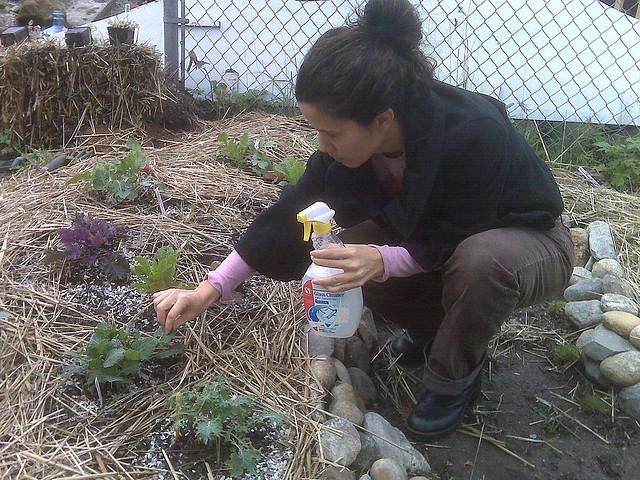 El jardinero plantas y flores c mo hacer pesticida - El jardinero en casa ...