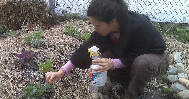 El jardinero plantas y flores c mo hacer pesticida for Jardinero en casa