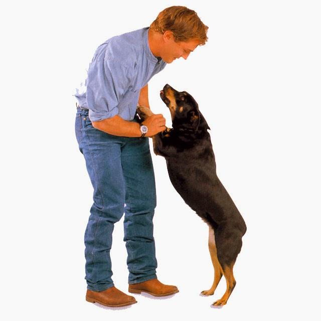 Cómo enseñar al perro que no salte cuando llegan visitas