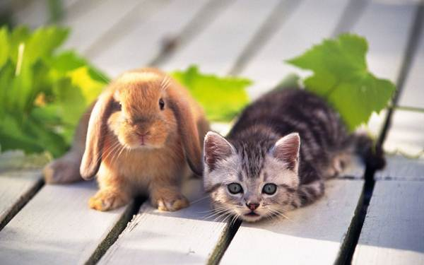 arnab-dan-anak-kucing