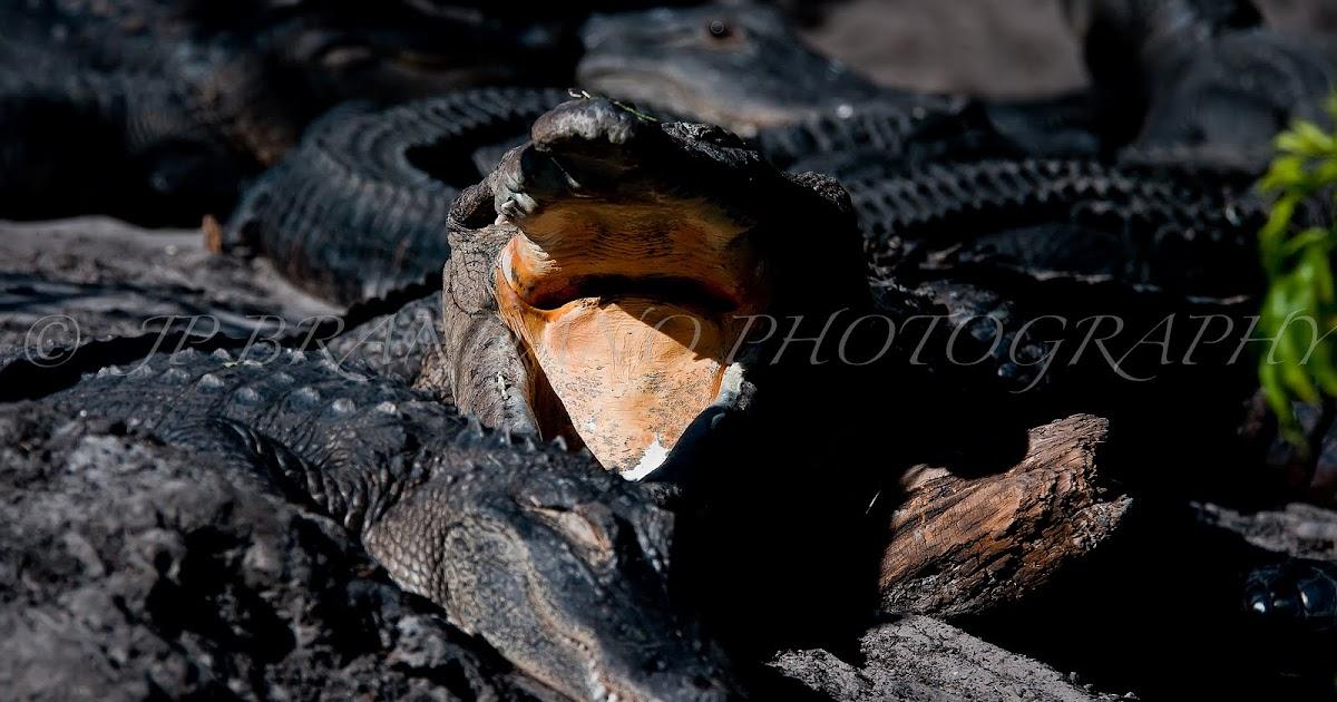 JP BRANDANO: FLORIDAS FINE ART PHOTOGRAPHERS: A THONG