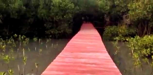 Gambar lokasi kawasan wisata hutan mangrove di Rembang, Jawa Tengah