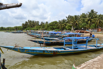 Boats at chilika lake , satpada