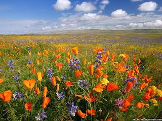 flores silvestres y cielo