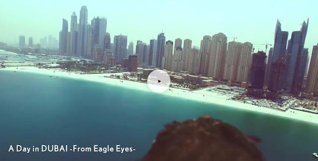 タカの目線で楽しめるレクサスLXのプロモ映像を公開。