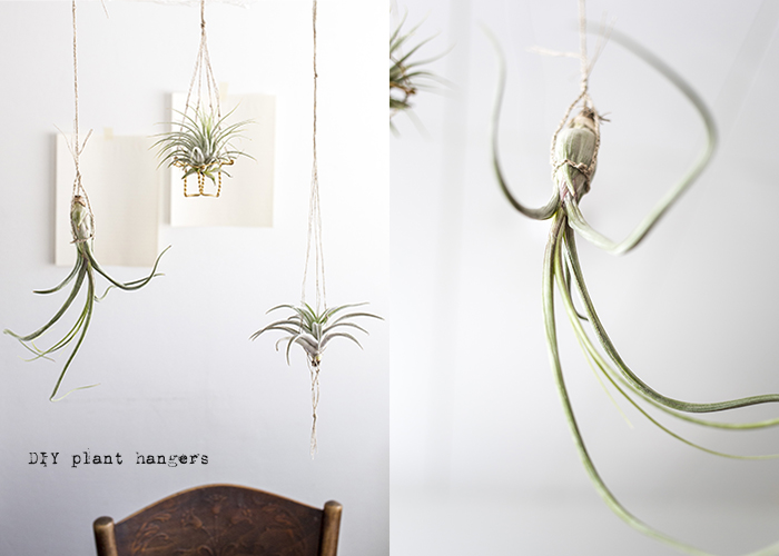 Tillandsia by Kreetta Järvenpää www.gretchengretchen.com