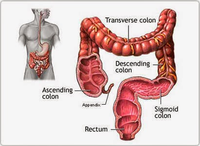 sigmoid colon facts & treament |healthy web m.d., Human Body