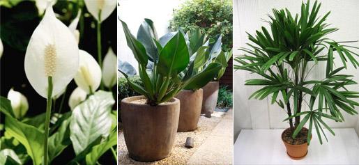 Quintal das flores by patricia plantas em casa qual a for Plantas de casa para interior